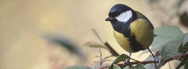 parque-ornitologico-mendixur-alava-araba-euskadi-pais-vasco-con-niños-bekerreke